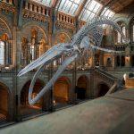 muzeji pasaulē